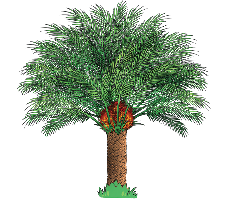 Oil Palm Tree Clip Art
